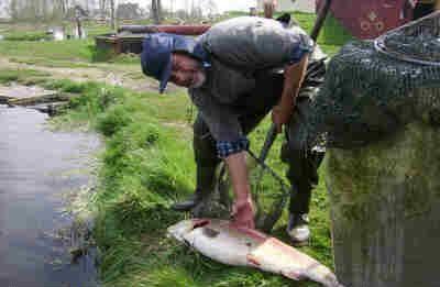 Himmerlands fiskepark og Camping Nibe